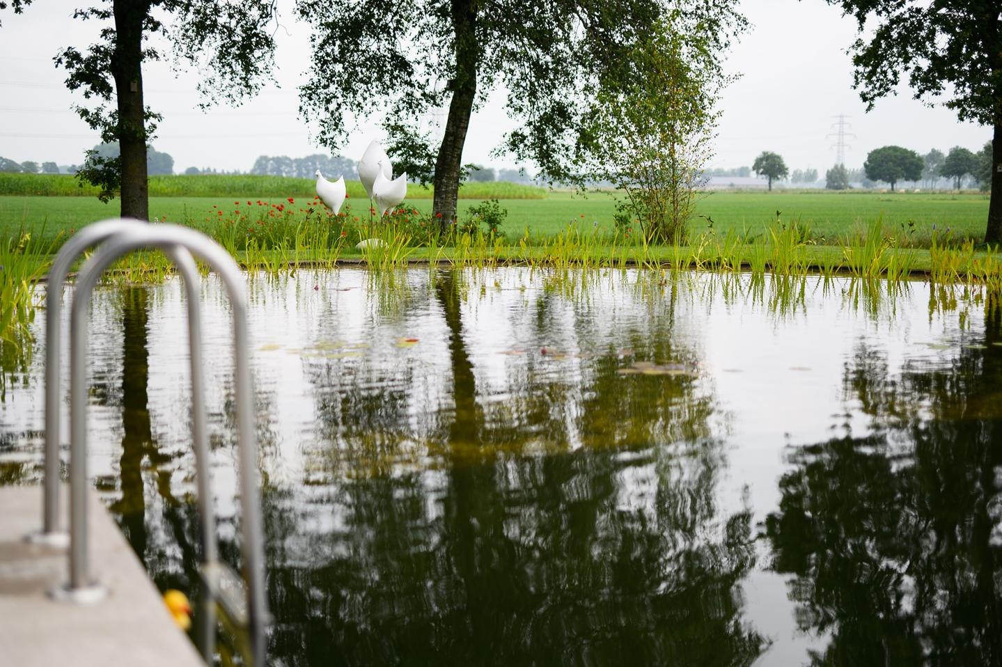 Natuurlijke zwemvijver Nijbroek 19