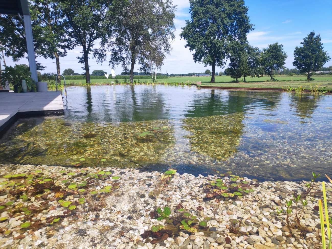 Zwem vijver aanleg Nijbroek Vos Tuinvisie