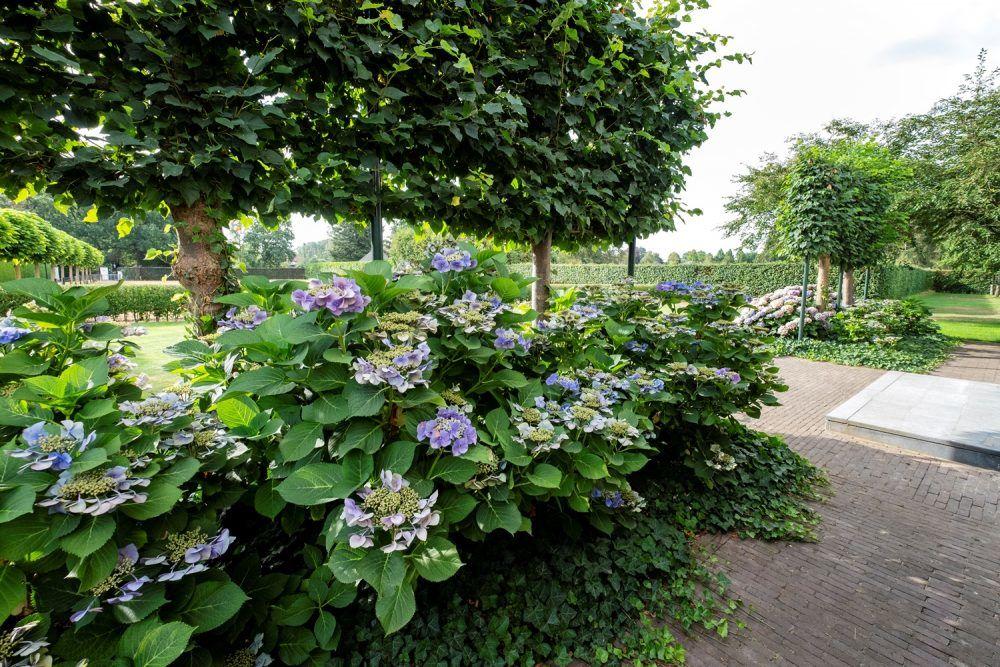 Ontwerp en aanleg landelijke tuin in Epe 9