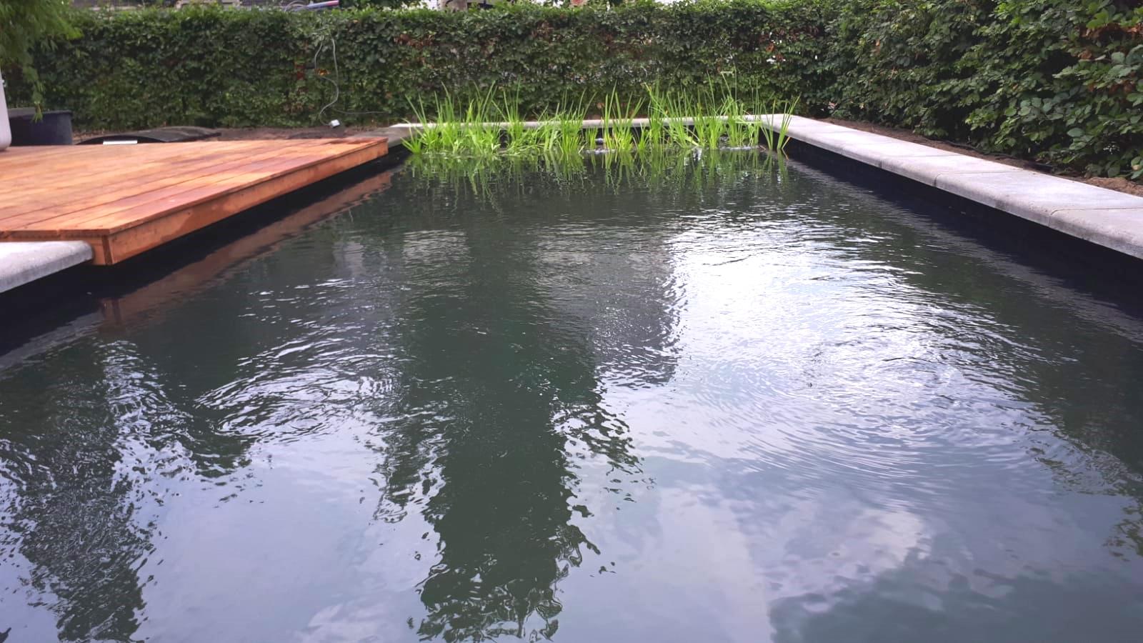 Onderhoud zwemvijver