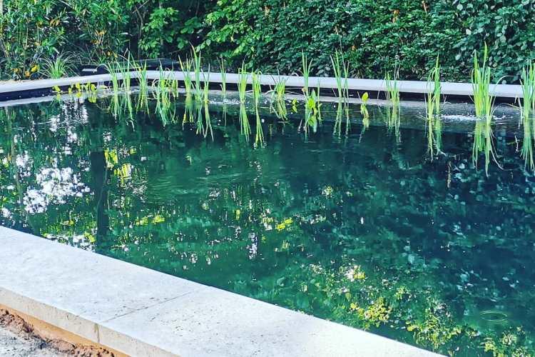 Aanleg zwemvijver Epe Vos Tuinvisie